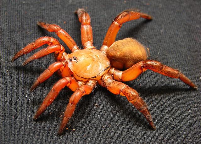 Nasty Spider