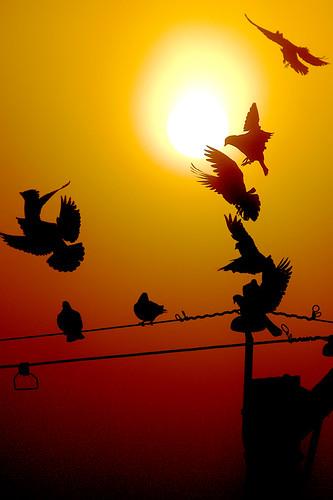 sun bird silhouette topv111 fog sunrise fly topv555 topv333 pigeon topv999 topv777 powerpole challengeyouwinner shiningyellow 2007012700012