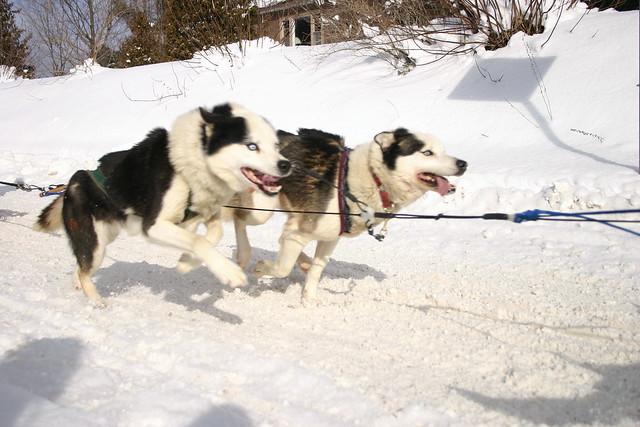 Adobt Dog London Ontario