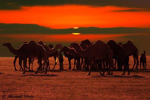 fantastic of The desert