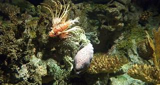Oceanário (peixe dragão e moreia)