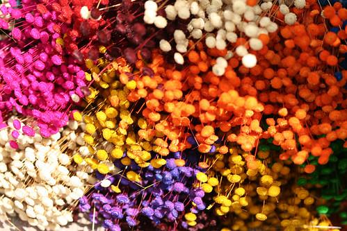 Série de Flores do Cerrado - Series with Cerrado's (one kind of Savanah) flowers 9 381 - 9