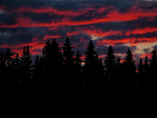 trees sunset summer kesä puut penttilänmäki