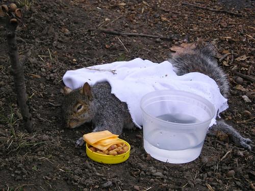 Dead Squirrel Flickr Photo Sharing