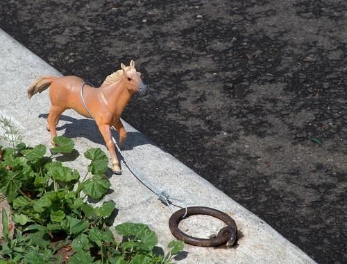 pretty-pony