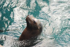 SeaWorld - Sea Lion