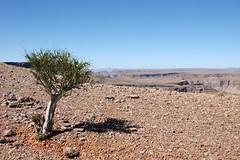 DSC01867 - NAMIBIA 2010