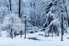 Skidmore Snow