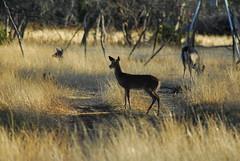 deer hunting day2 (9)