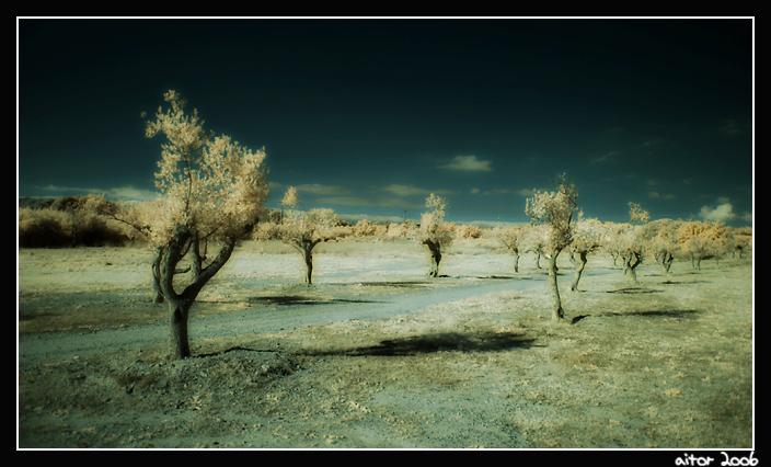 little-IR-trees