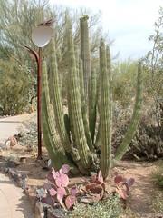 Desert Botanical Garden 4