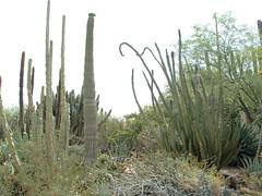 Desert Botanical Garden 16