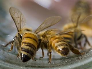 _mg_1366-bees