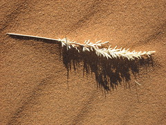 A straw of life in the desert