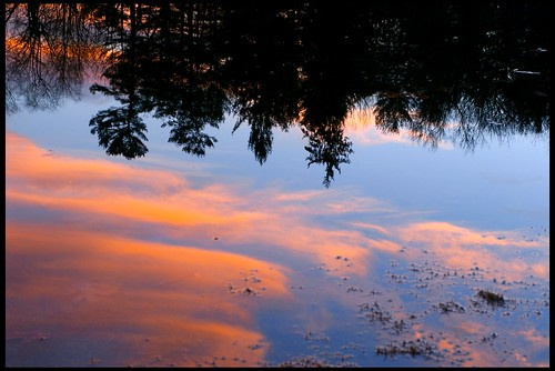 trees sunset reflection time newhampshire concord whitepark 50mmf14af