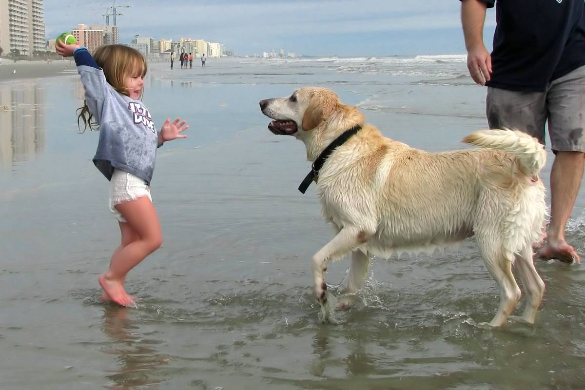 Watch Out! Wonderful places Where You Can Take Your Canine Companion