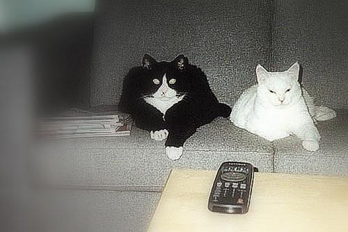 Fritz & Laban watching TV
