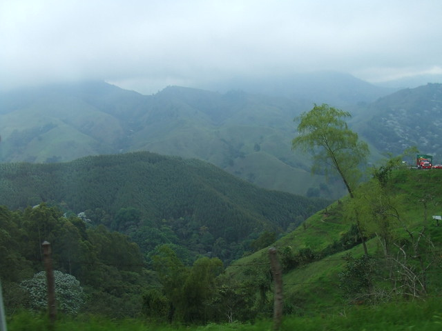 The Colombia Rainforest