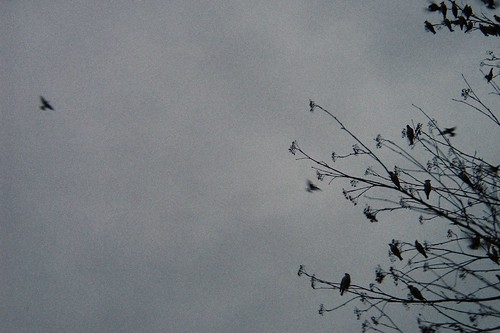 Bleak birds