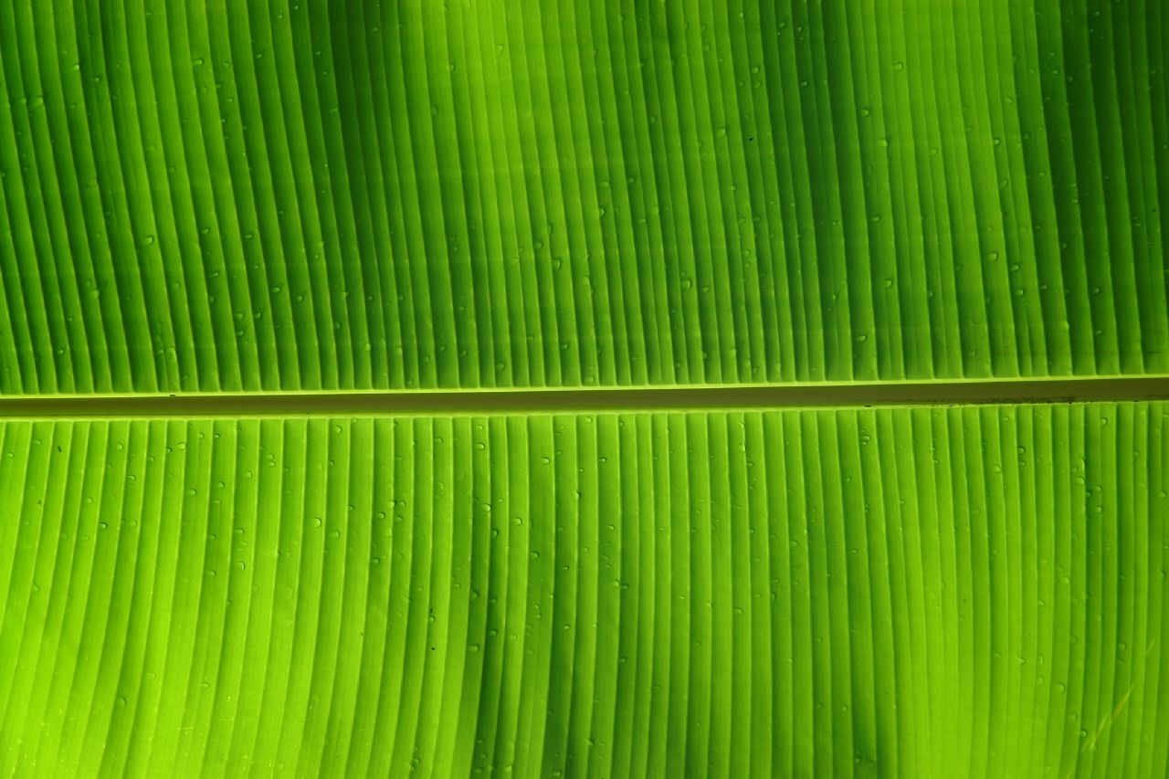 Banana Leaf A Photo On Flickriver