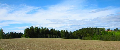 summer field kesä pelto tattari penttilänmäki