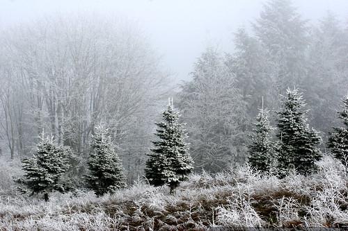 frozen meadow    MG 7145
