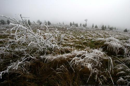 frozen meadow    MG 7165