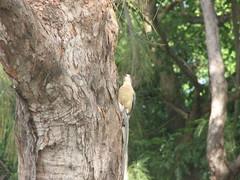 woodland, rainforest, branch, tree, plant, fauna, forest, trunk, woodpecker, bird, wildlife,