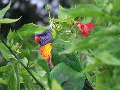 animal, flower, fauna, lorikeet, beak, bird, wildlife,