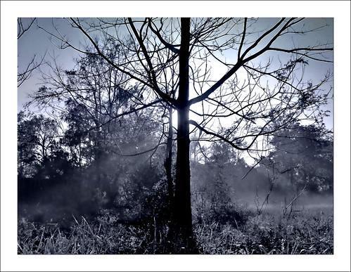morning tree fog sunrise rouge louisiana baton