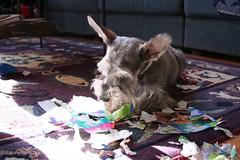 our little paper shredder