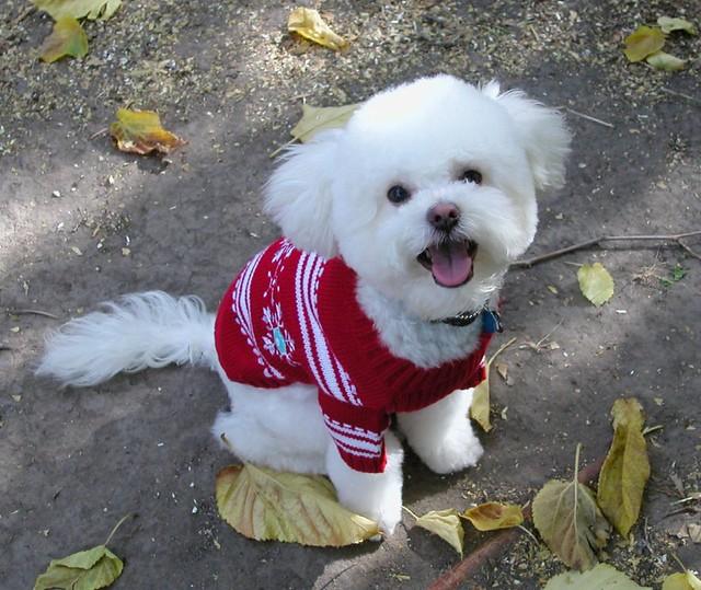 I like my new sweater