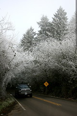 truck emerging from tunnel of frosted trees    MG 7198