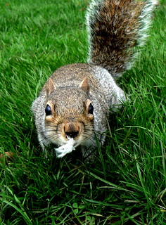 Mrs Squirrel told me to go out and get something that would tickle her fancy!
