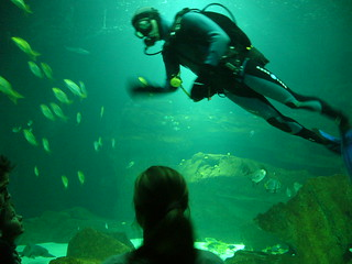 A day with  Marine World at Cineaqua - Things to do in Paris