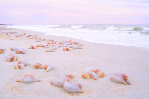 pink beach beautiful sunrise jellyfish florida fl babel pontevedrabeach