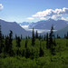 Chugach Mountains, glacier and stunted trees