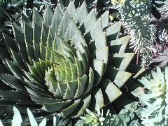 flower(0.0), plant(1.0), agave azul(1.0),