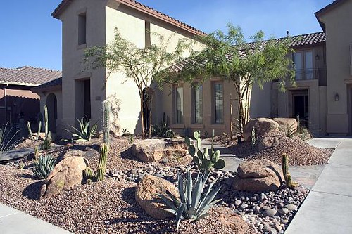 Desert plant front yard flickr photo sharing - Front yard desert landscaping ...