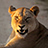 the Lion (Panthera leo) only group icon