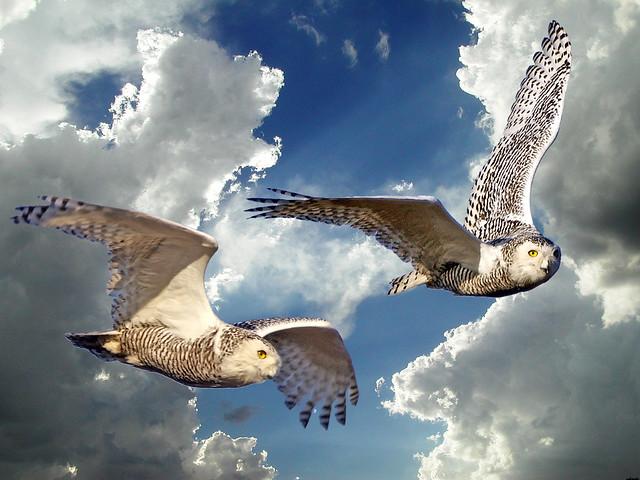Hedwig?