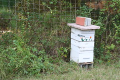 yard(0.0), invertebrate(0.0), insect(0.0), membrane-winged insect(0.0), beekeeper(0.0), bee(0.0), beehive(1.0),
