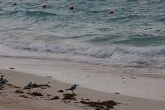 Beach Roaming
