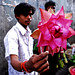 Petals, Toil and Business at Dadar's Phulgalli [PHOTO 4] - The Lotus by lecercle