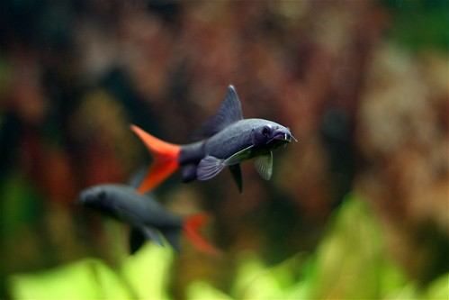 orange fish denmark grey flying dof danmark fisk 400d canon400d flickrfavboydoesitagain