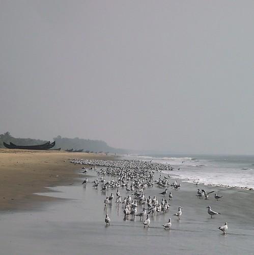 sea vacation seagulls india mist beach water birds square geotagged boats haze sand kerala bumped geo:lat=10347766 geo:lon=76110277 gettyvacation2010