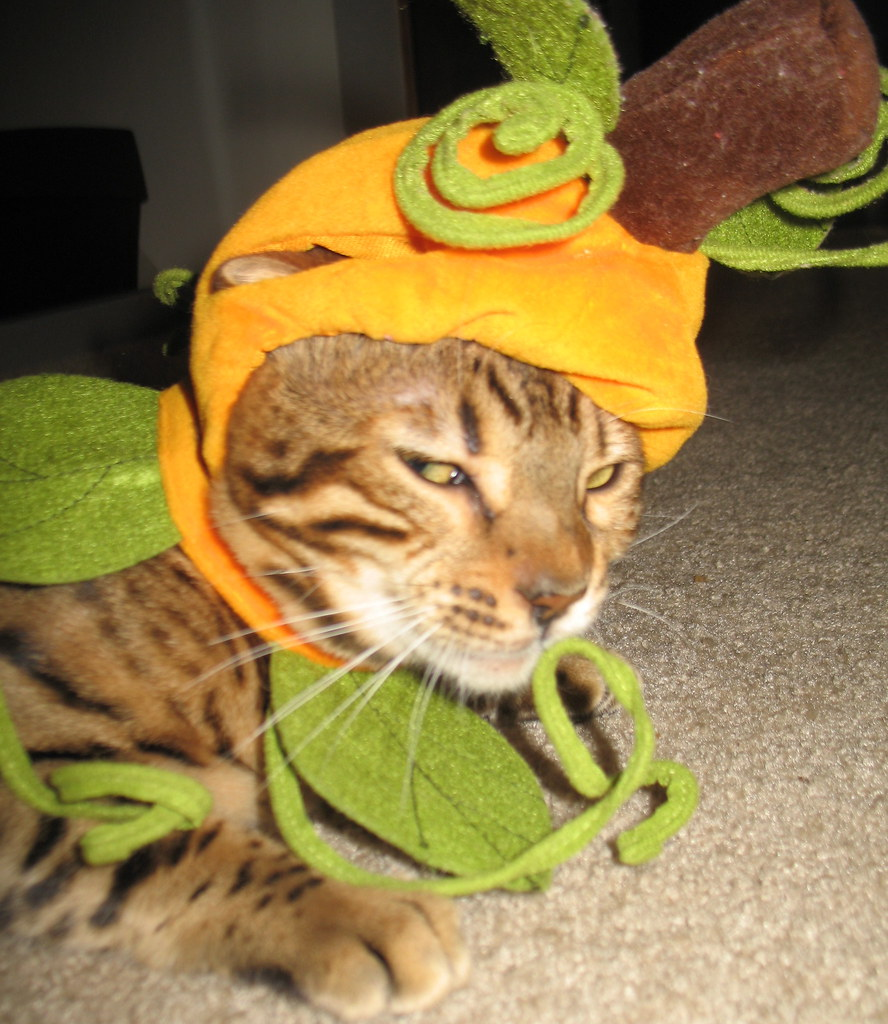 353361048 eb86775d93 b A Caturday Collection, Cats in Costumes Ready for Halloween
