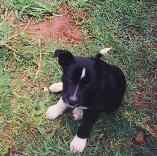 Puppy Snoopy - RIP 1991 - 2006