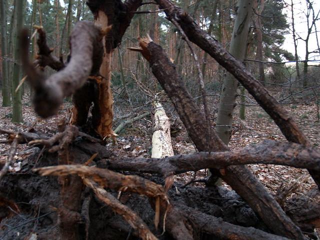 Im Wald 02