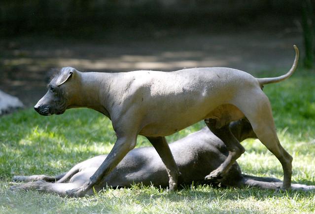 Dog S Hairless Under Legs Soap